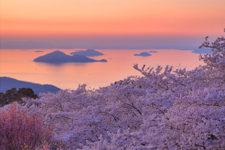 news-hanami-sakura-03