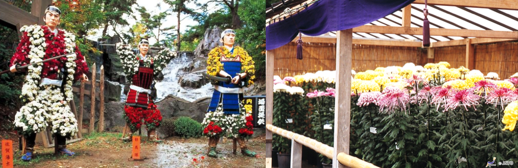 news-chrysanthemum-festival-02