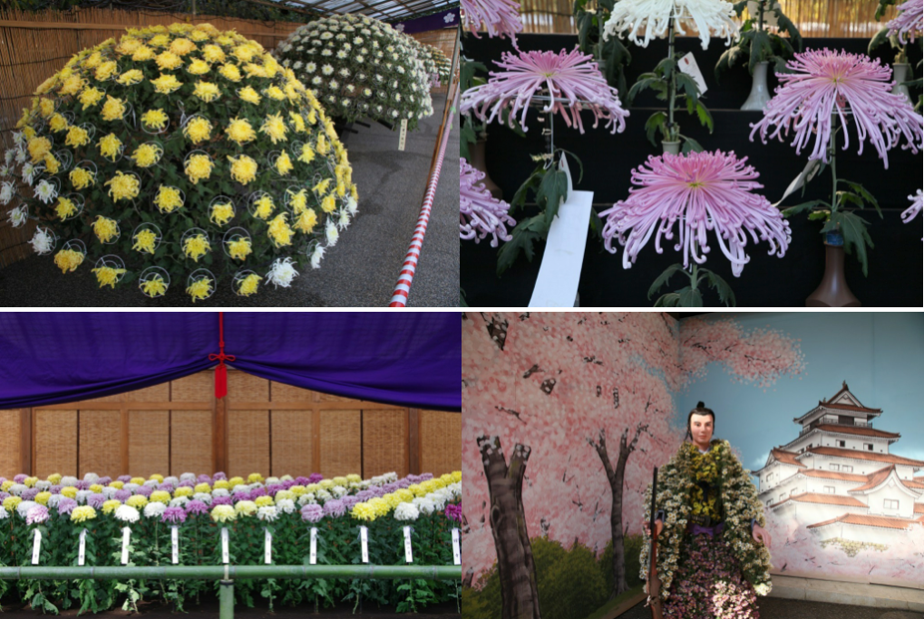 news-chrysanthemum-festival-03