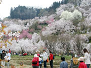 attractions-fukushima-02