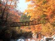 attractions-tokushima-01