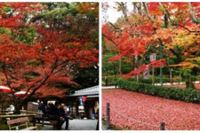 news-autumn-leaves-kyoto-02