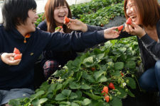 news-strawberry-farm-03