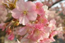 news-sakura-viewpoint-02