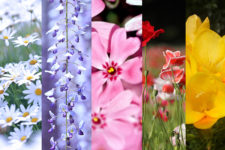 news-spring-flowers-seasons-14