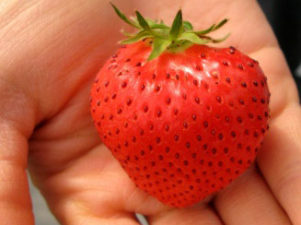 strawberry-in-japan-08