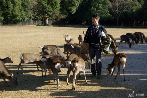 9-area-take-photo-japan-style-07-nara-park