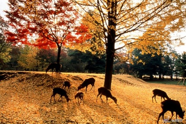 9-area-take-photo-japan-style-08-nara-park