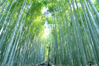 9-cities-relax-with-family-14-kyoto