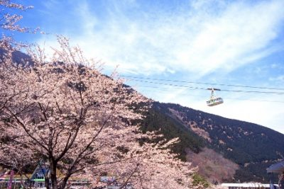 9-cities-relax-with-family-20-beppu