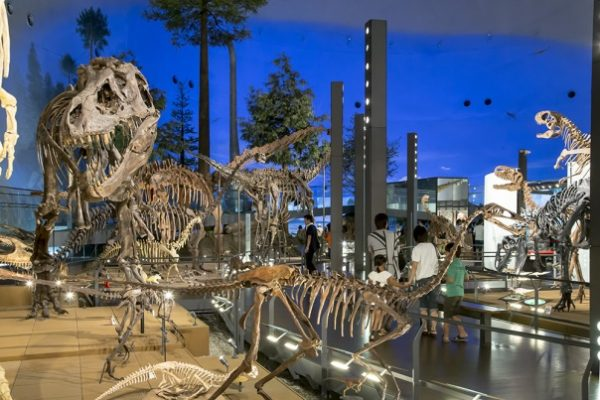 9-places-to-new-experience-05-fukui-prefectural-dinosaur-museum