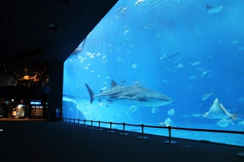 9-places-to-new-experience-14-okinawa-churaumi-aquarium