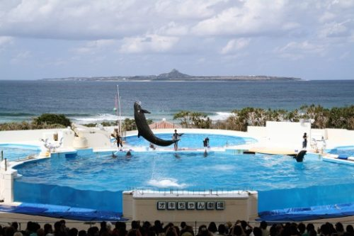 9-places-to-new-experience-15-okinawa-churaumi-aquarium