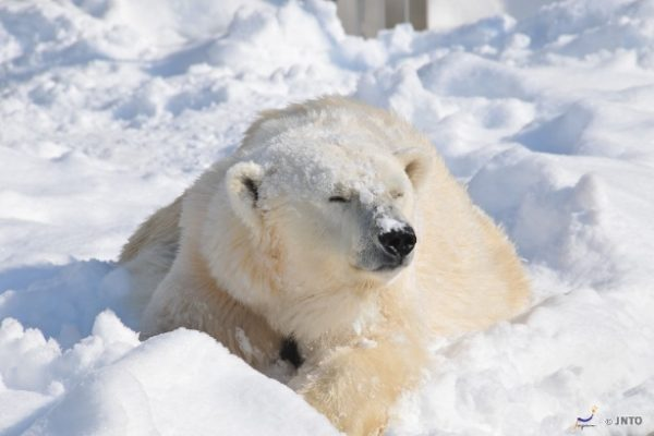 9-places-to-new-experience-17-asahiyama-zoo