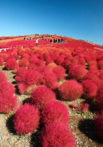 hitachi-seaside-park-02