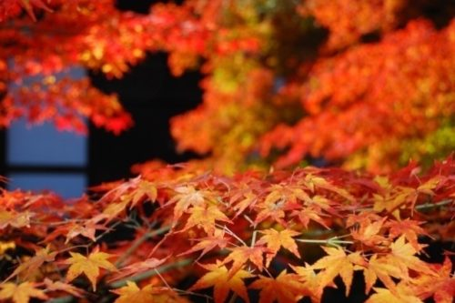 kyoto-in-autumn-02
