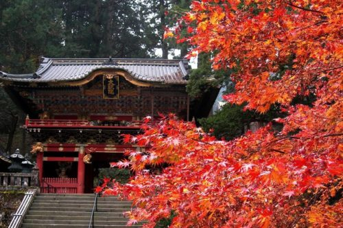 nikko-in-autumn-01