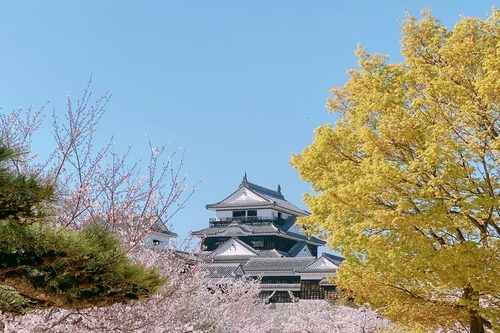 This is Matsuyama Castle in spring.
