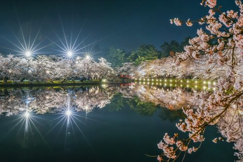Amazing Landscape Night View Of Cherry Blossoms (Sakura) With River and Bridge Reflaction At Hirosaki Cherry Blossom Festival, Hirosaki Park, Aomori, Japan