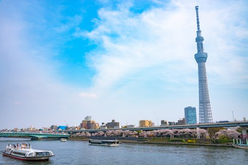 Tokyo, Japan - March 29, 2018: Tokyo Skytree Tower with cherry blossoms in full bloom at Sumida Park. There's a lot of cruise ship and water bus ride on Sumida River.